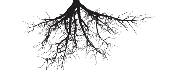 roots-e1562995438434.png